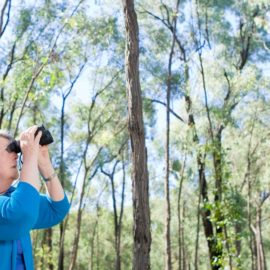 birdwatching in Chiltern Mt-Pilot National Park